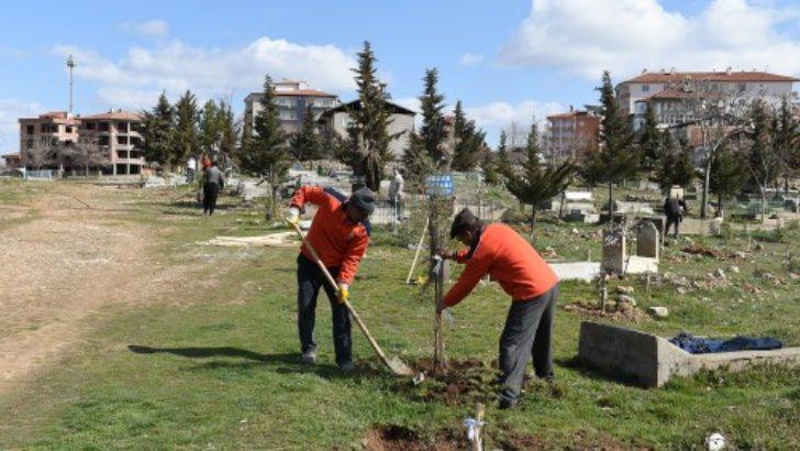 Mezarlıklara fidan dikimi