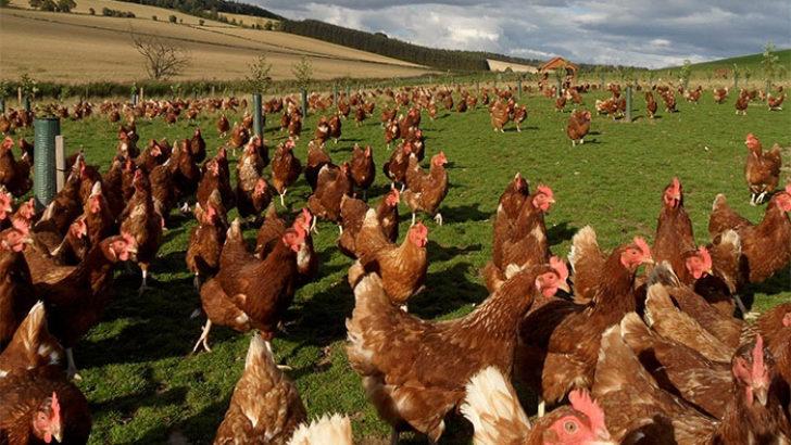 Darende'de üretim çiftlikleri açılıyor