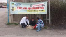Evcil hayvanlar aşılandı