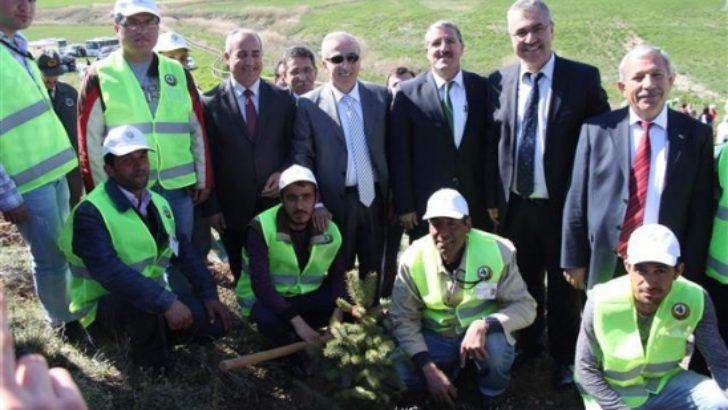 Malatya'da ağaçlandırma projesi