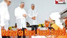 Malatya'da Kayısı Hasadı Başladı