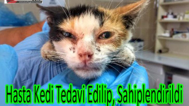 Hasta Kedi Tedavi Edilip, Sahiplendirildi