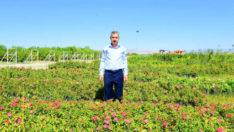 İlçemiz, Mevsimlik Çiçeklerle Daha Güzel, Daha Renkli