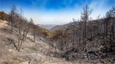 İzmir Valiliği'nden orman yangınlarıyla ilgili beklenen izin geldi