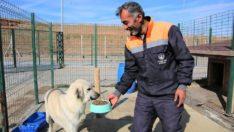 Hayvan barınağı ziyaretine ara verildi