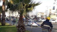 Adıyaman Belediyesi'nden Ağaçlara Bahar Bakımı