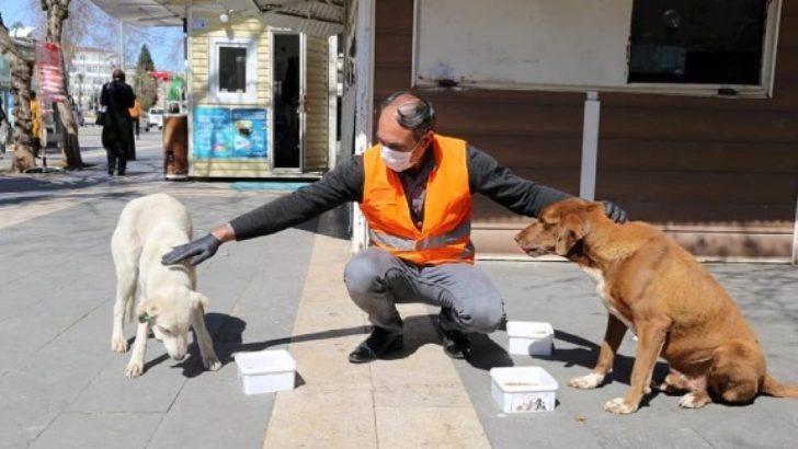 Adıyaman Belediyesi, Sokak Hayvanları İçin Mama ve Yem Bıraktı