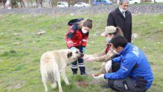 Elazığ belediyesi sokak hayvanları için park ve bahçelere mama bırakıyor