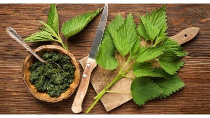 Doğadan Gelen Alternatif Sağlık: Isırgan Otu Çayı