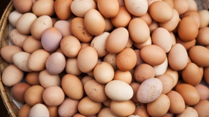 Köy Yumurtası Faydaları