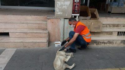 Sokak Hayvanları Aç Bırakılmıyor