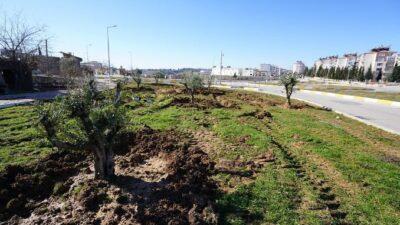 Ağaçlandırma Çalışmaları Kavşaklarda Devam Ediyor